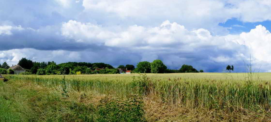 Korenveld in de Val de Loire